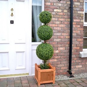 buxus-sempervirens-3-lopte