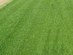 Priprema terena i naručivanje travnjaka